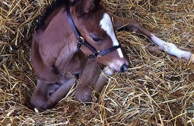 New Foals Daylesford