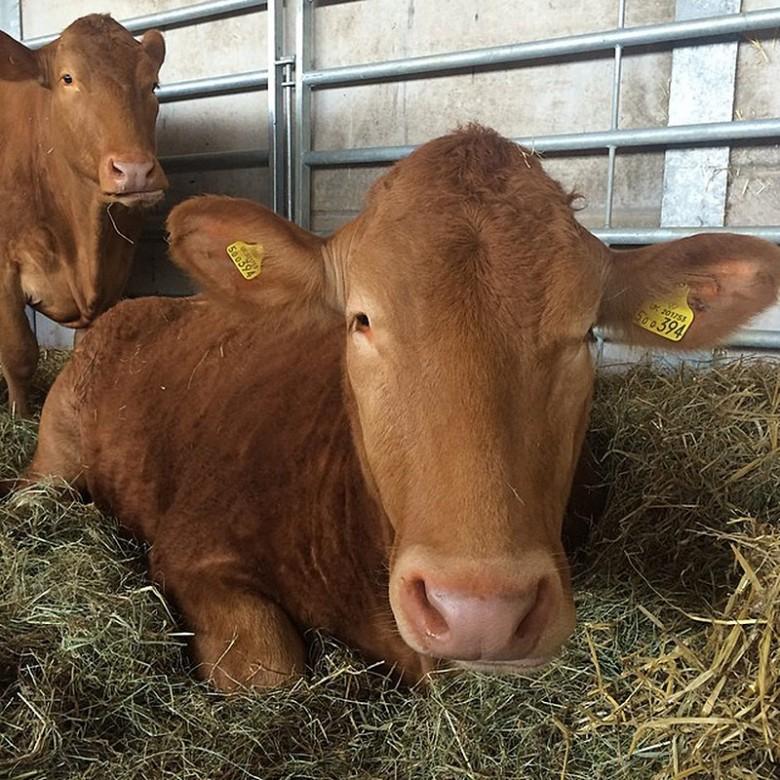 Daylesford Farm Photos