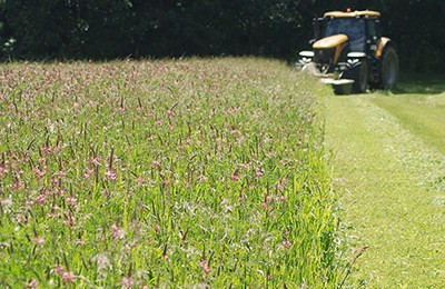 Sainfoin at Daylesford