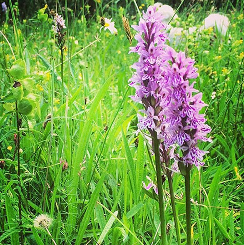 wild orchids  carole bamford, Beautiful flower