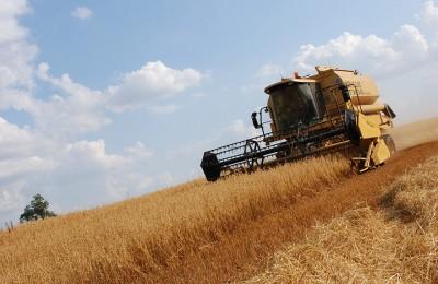 Daylesford Farm Harvest