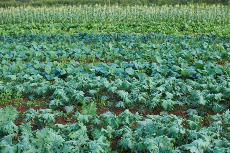 Soil Association Daylesford Farm