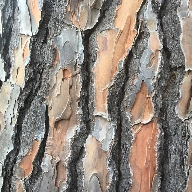 Beautiful bark #instanature #trees