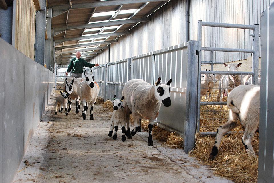 Lambing Season 2015