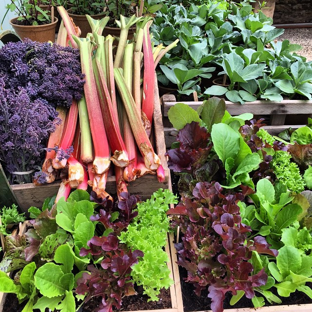 Produce from the farm @daylesfordfarm #cotswolds #organic #growingthings #cleanfood