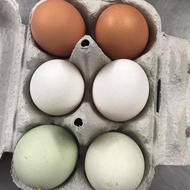 Six of the best organic eggs @daylesford  #organic #happy hens