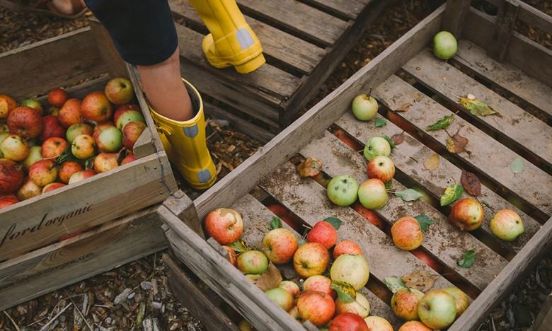 HarvestFestival_00
