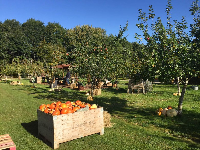 A view of the farm with a crate of harvested pumpkins