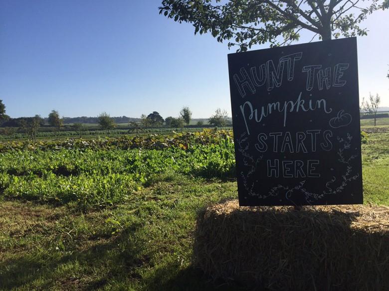 Hunt the pumpkin starts here!