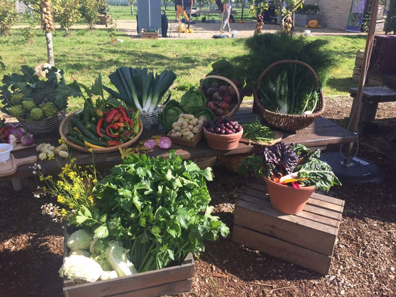 A collection of the wonderful produce harvested here on the farm