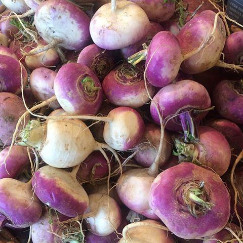 Turnips from the market garden - delicious in an autumn stew #rootvegetables #organic #seasonal #autumn #marketgarden @daylesfordfarm