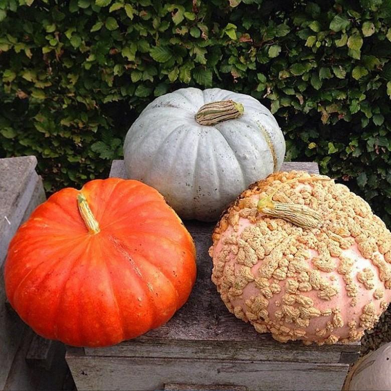 Spiced pumpkin casserole
