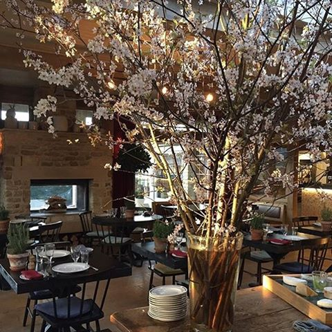 Spring has come early at The Wild Rabbit #spring #blossom #cotswolds #thewildrabbit #michelinpuboftheyear  @thewildrabbitkingham