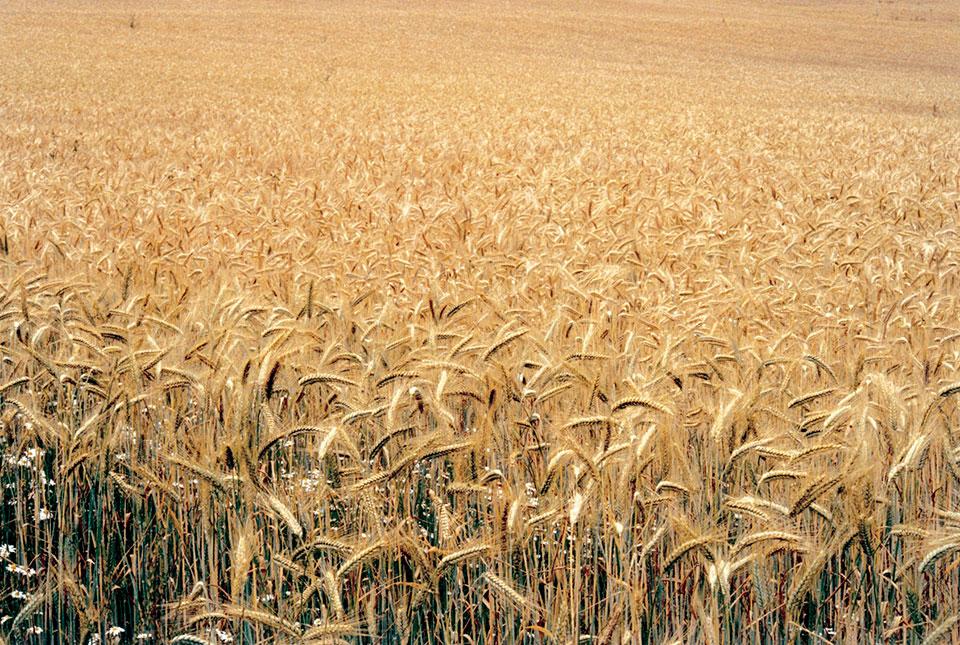 Seed Swap, Soil Association