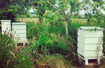 BeeKeeping_thumb