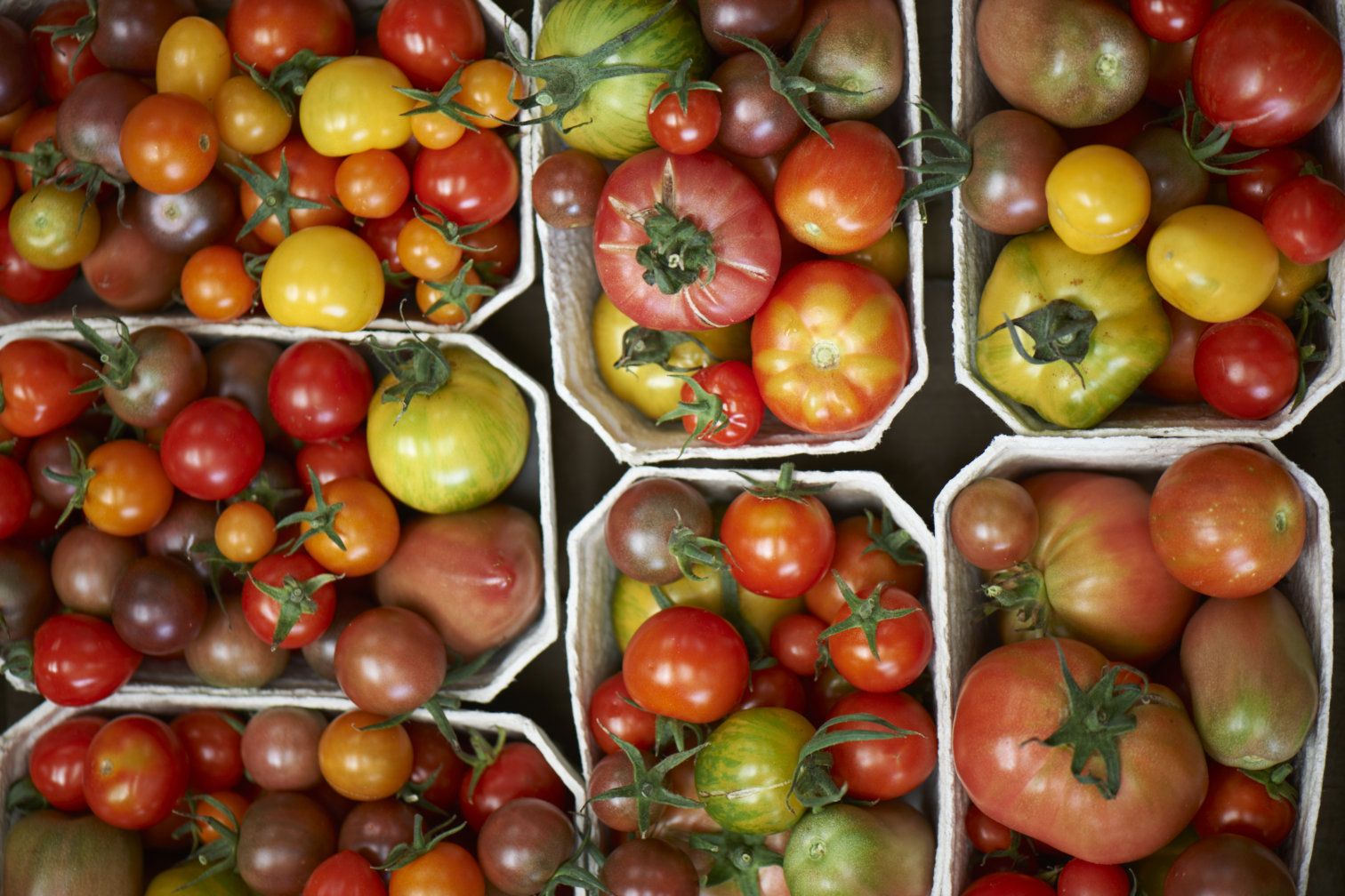 Punnets of fresh tomatoes shot from overhead