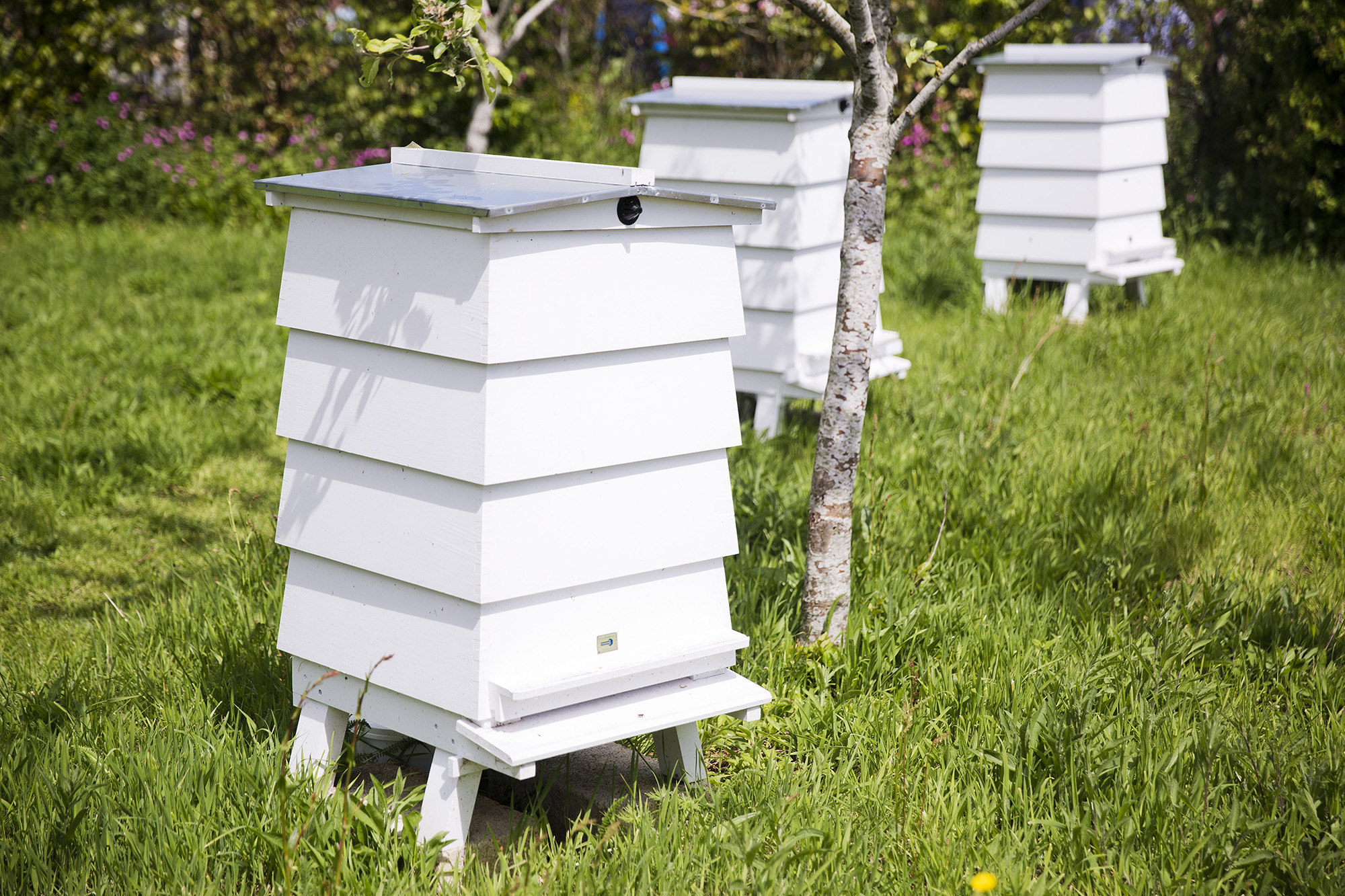 3 White Bamford and Daylesford Bee Hives