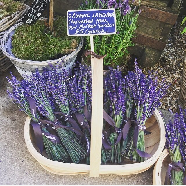 Lavender harvested from the farm in the Garden Room @daylesfordfarm #savethebees #pollinators #organic #sustainable #farming #summer #cotswolds