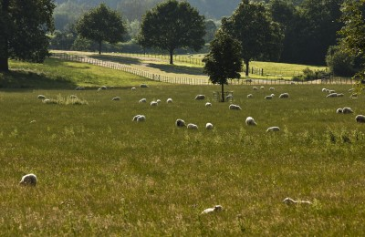 Fields with Sheep and Trees at the Daylesford Organic Farm