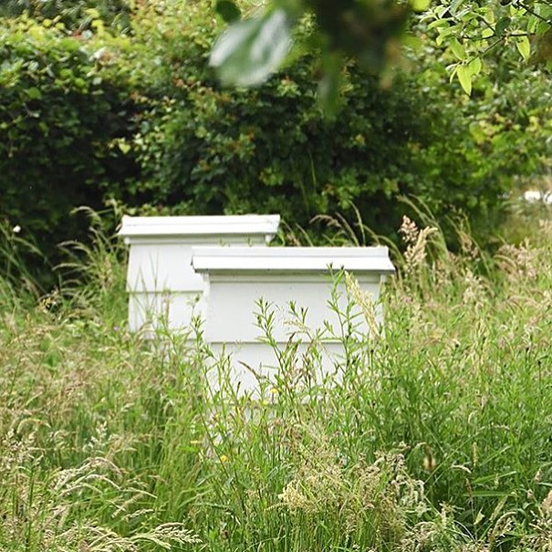 The beehives thriving in our wild meadows at the farm #savethebees #pollinators #bees #wildmeadow #organic #sustainable #farming @daylesfordfarm @agricology