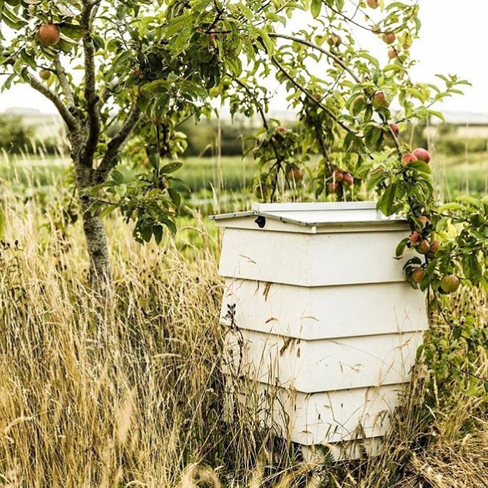 Looking forward to our Harvest Festival at the farm on Saturday 24th September - a day of feasting, fun and family celebrations. Full details are on my blog #harvest #festival #organic #sustainable #farming #cotswolds #savethebees @daylesfordfarm