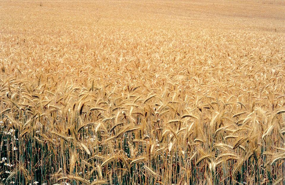 Organic_September_02