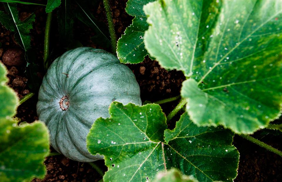 Organic_September_05