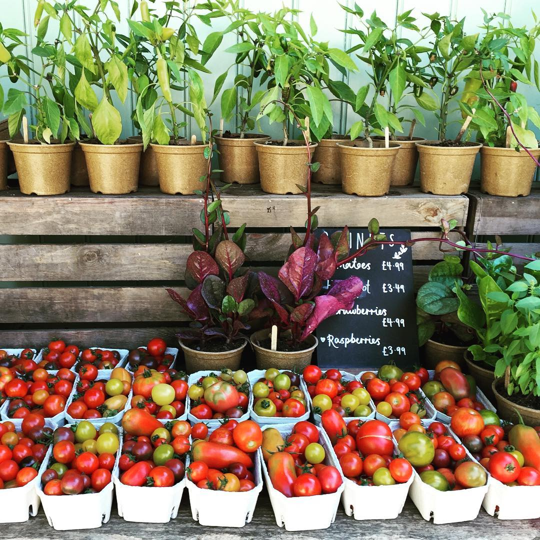 This year our market garden team have grown over 45 varieties of heritage tomatoes. Follow the link in my bio for three recipes that celebrate these delicious organic fruit #organicseptember #realfood #realflavour #heritage #tomatoes @daylesfordfarm