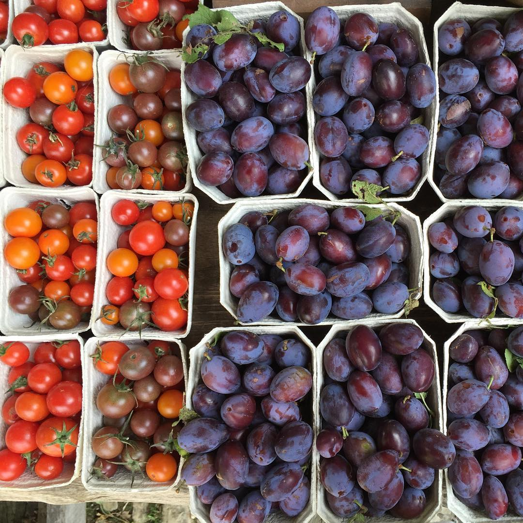 Delicious plums and heritage tomatoes just picked in the market garden #autumn #fruit #seasonal #organic #organicseptember #marketgarden #cotswolds @daylesfordfarm