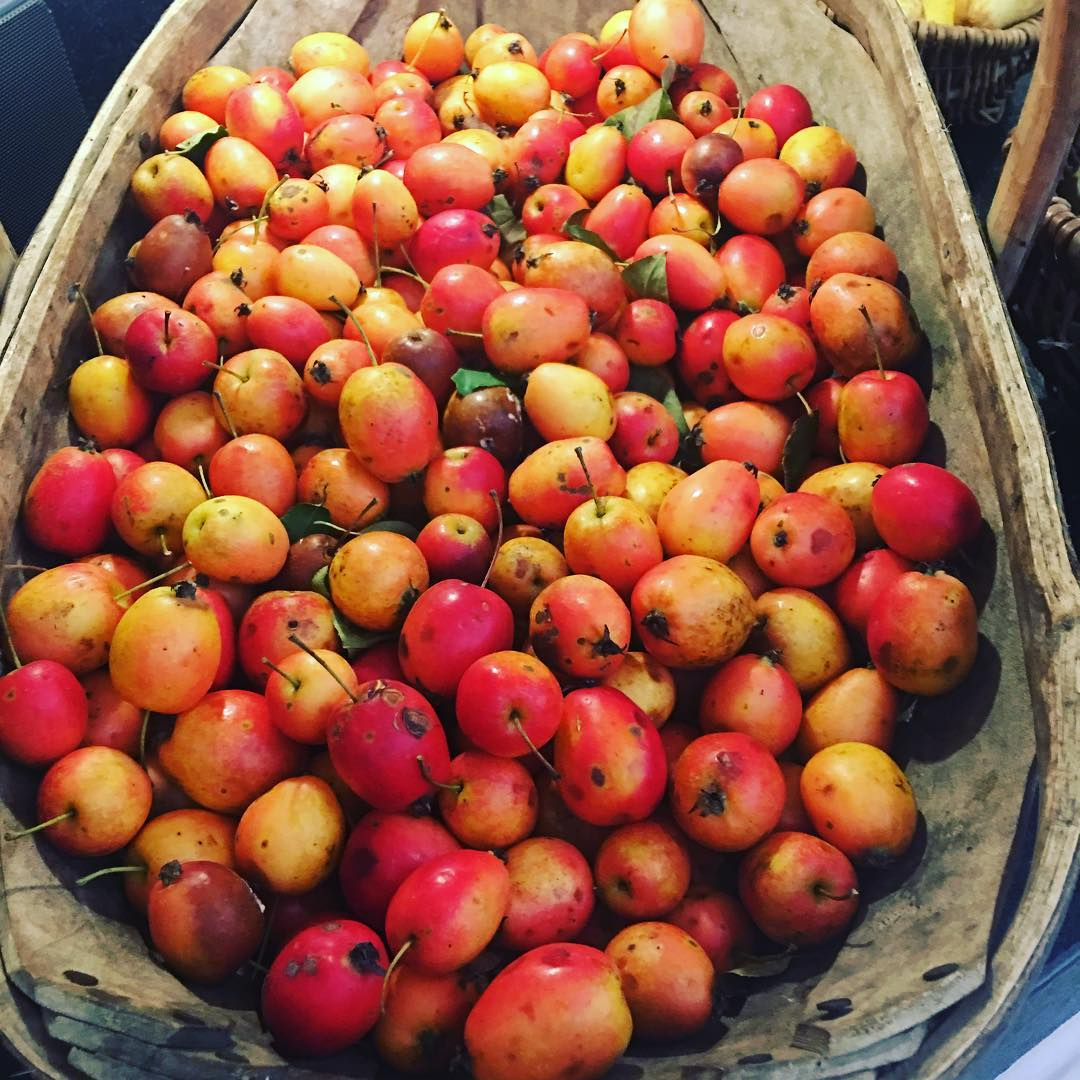 Lots of crab apples this morning from the garden. #crabapplejelly