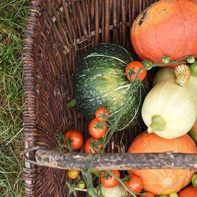 A basket of organic goodness from the market garden #harvest #autumn #organic #organicseptember #seasonal #Eattobehealthy @daylesfordfarm