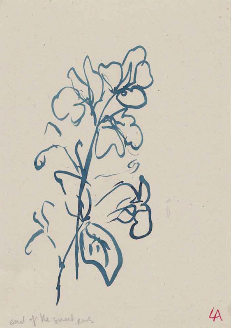 Lucy Auge plants