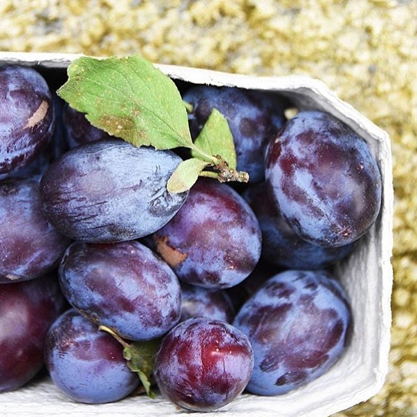 Making the most of the last of the season's plums with three new recipes on my blog - the link is in my bio #Autumn #plums #recipe #compote #casserole #torte #seasonal #cooking @daylesfordfarm