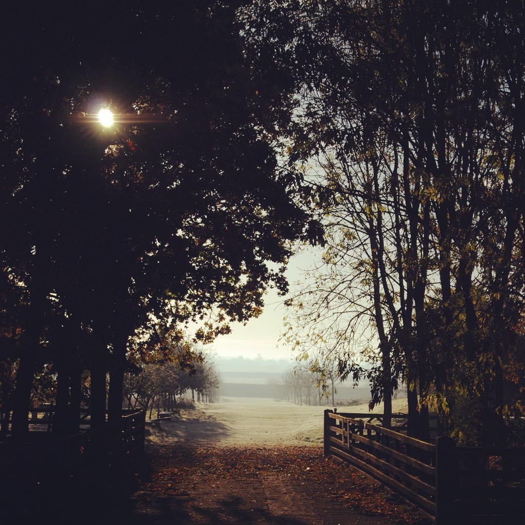 Misty morning in the market garden @daylesfordfarm #winter #mist #marketgarden #cotswolds