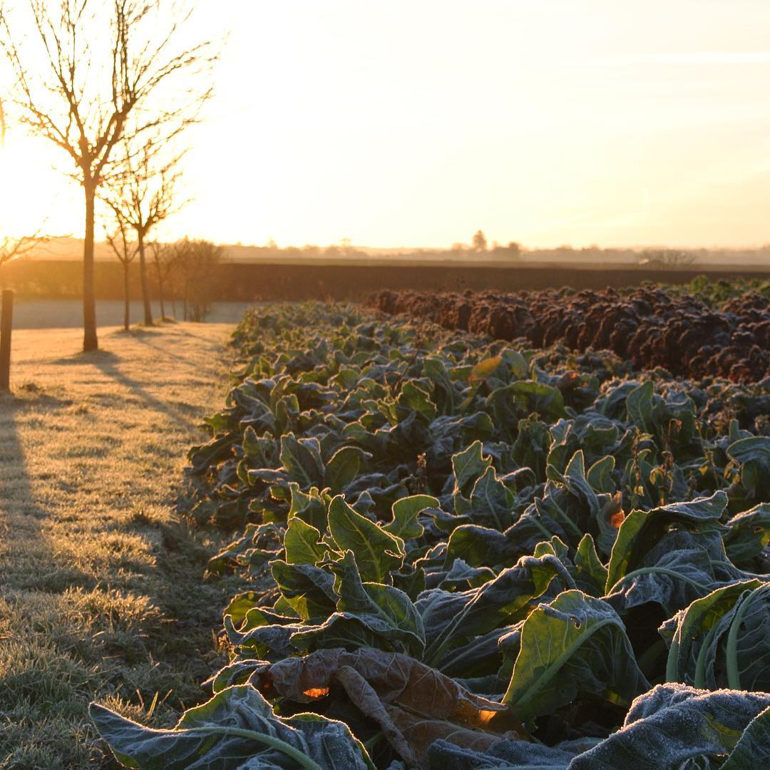 A beautiful sunrise in the market garden  #winter #nature #organic #farming #cotswolds @daylesfordfarm