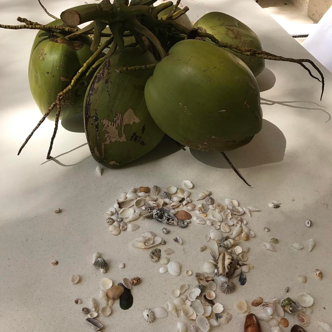 Shells and coconuts for table decoration today #lovenature #table