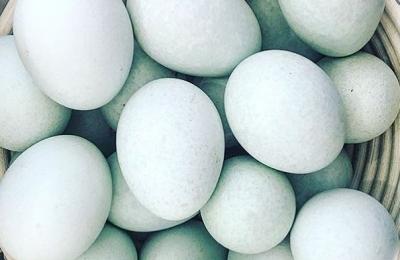 Our organic Legbar eggs ready for cracking on Shrove Tuesday #shrovetuesday #organic #pancakes #freerange #legbarhens @daylesfordfarm