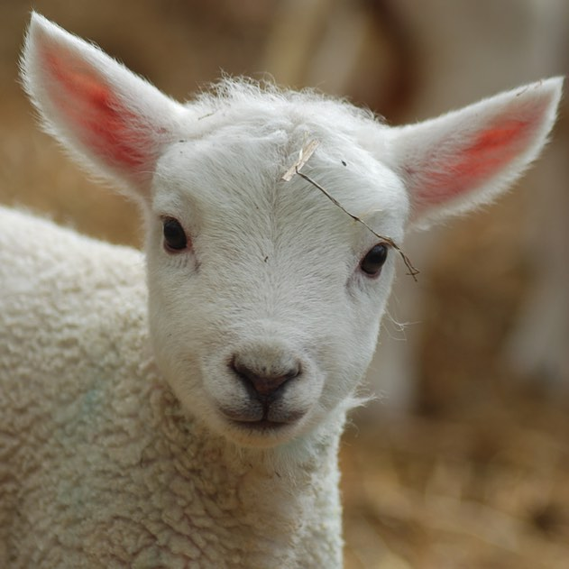 Come and meet some of the new faces on the farm at our annual Lambing Tours on Saturday 8th April. Full details in my bio #spring #lambs #farmlife #newlife #easter @daylesfordfarm
