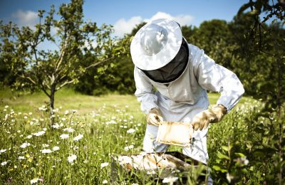 Daylesford Bee Keeping