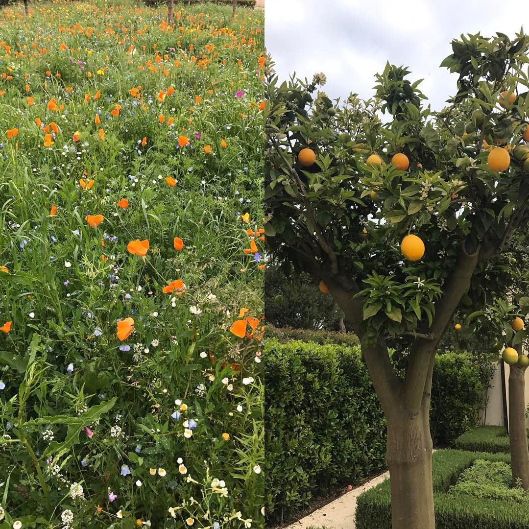 Wild flower meadow matching the orange trees #nature