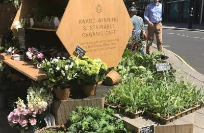 Bee friendly plants outside our Pimlico Road farmshop #popup #flowerstall #chelseaflowershow #pimlicoroad #saveourbees @daylesfordfarm