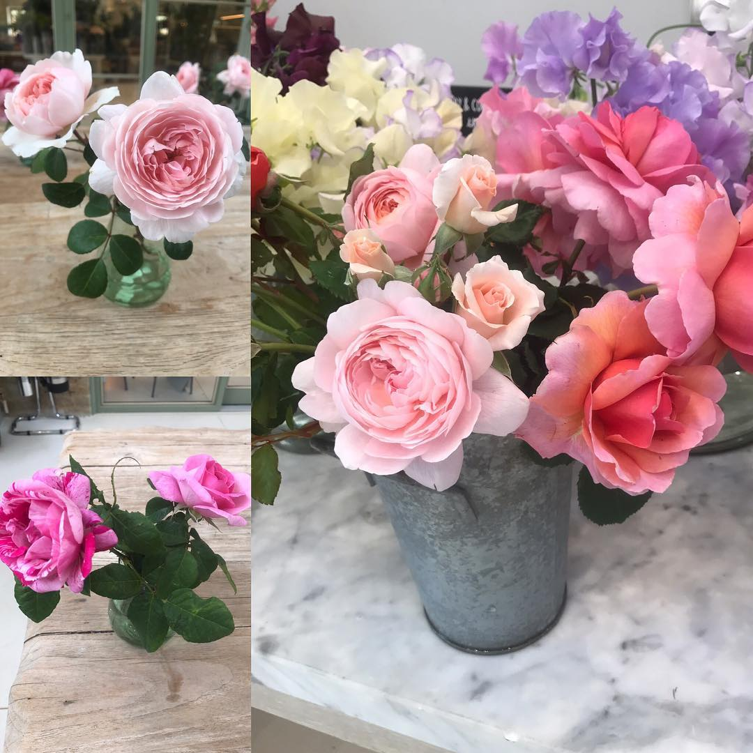 Just loving all the wonderfully different scents from our own homegrown English roses from the cutting garden @daylesfordfarm #organic #englishrose #scented #homegrown