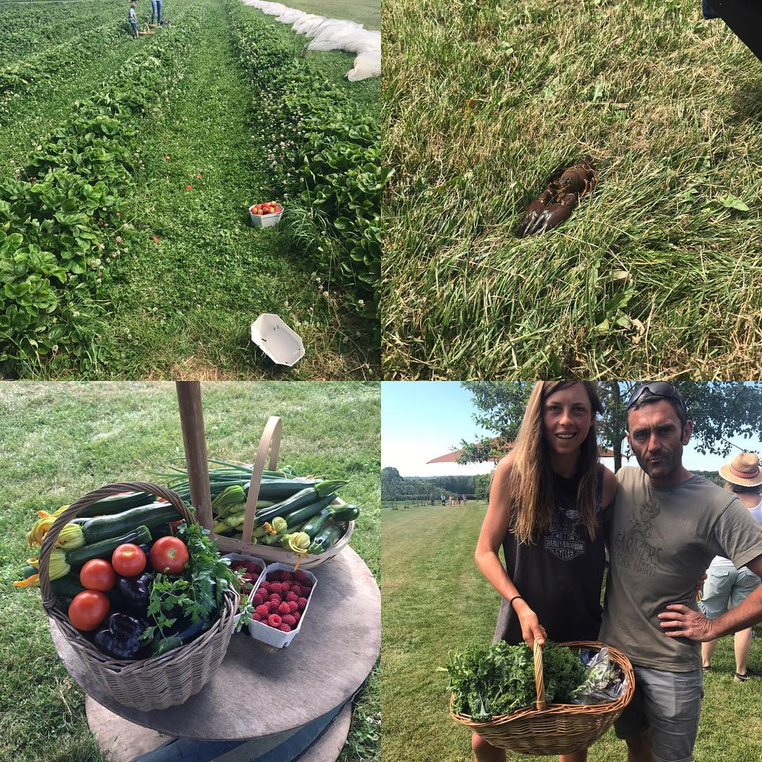 Foraging day @daylesfordfarm #pickyourown #strawberryfieldsforever #crayfish #organic