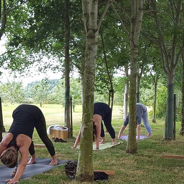 Yoga in the orchard at the Haybarn Spa #nature #wellness #mindfulness #yoga  @bamfordhaybarnspa