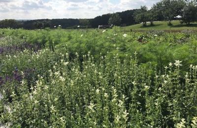 The wild flower meadow enjoying some sunshine after the rain #wildflowermeadow #organic #flowers #savethebees @daylesfordfarm