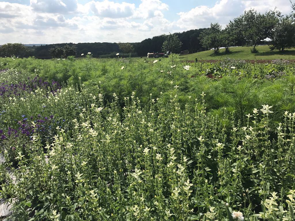 The wild flower meadow enjoying some sunshine after the rain #wildflowermeadow #organic #flowers #savethebees @daylesfordfarm