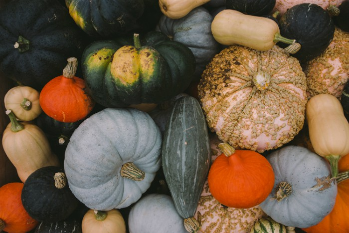 26.07 pumpkins and marrows