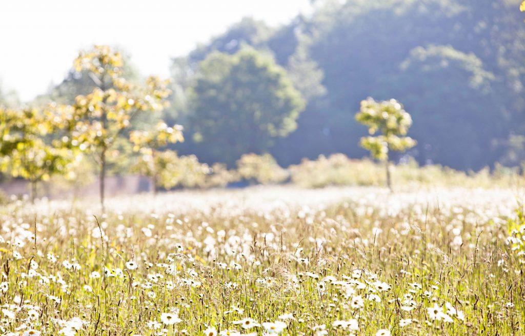 daylesford organic bee habitat