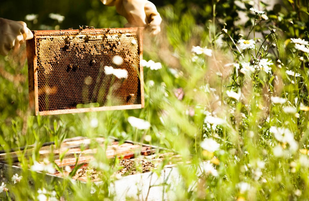 daylesford beehives