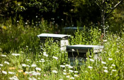 protecting bees at daylesford